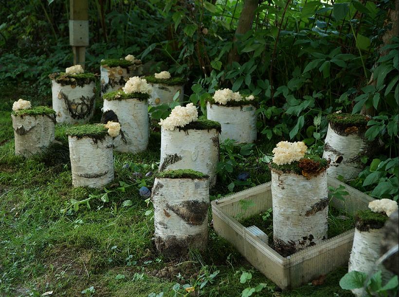 www.pilzgarten.at