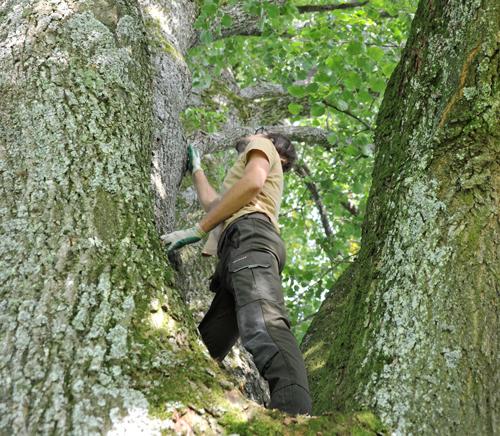Baumpflegespezialist